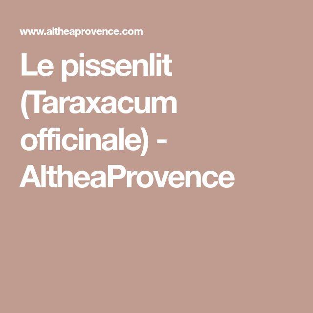 Le pissenlit (Taraxacum officinale) - AltheaProvence