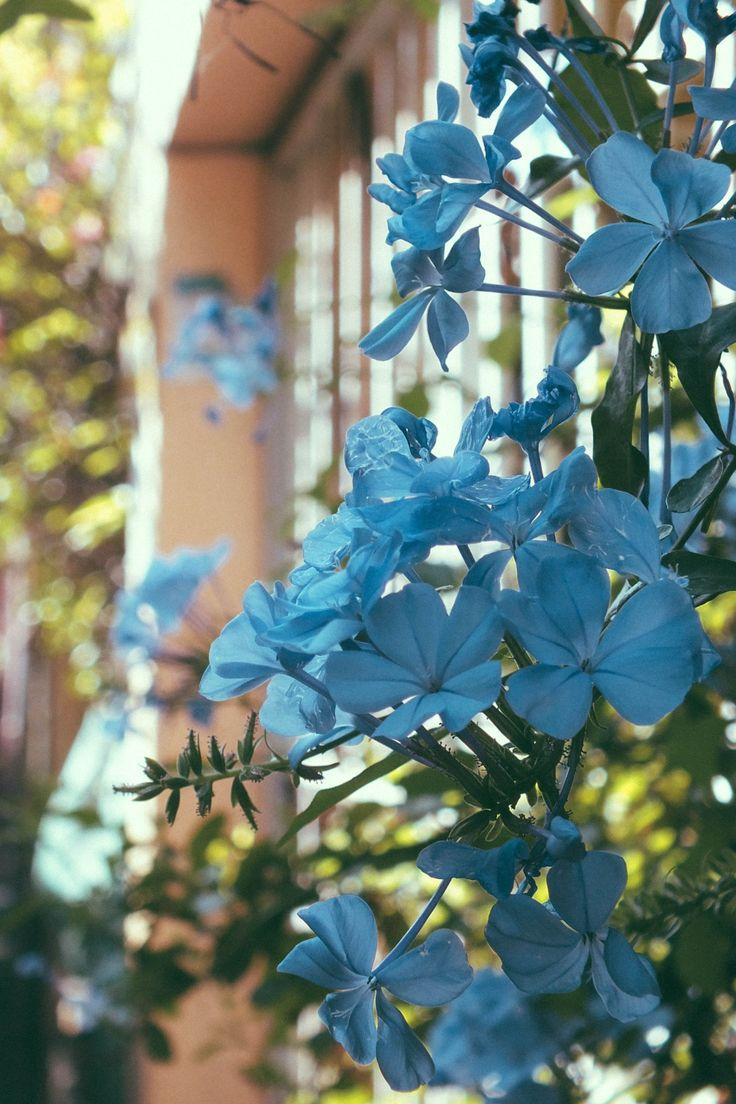 76 Best Pretty Flowers Images On Pinterest Beautiful Flowers