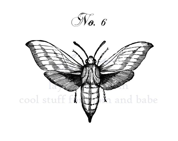 Moth drawing - photo#7