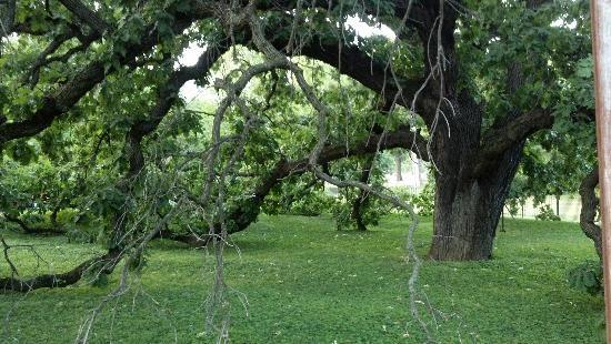 Giant Oak Park, Peoria, Illinois