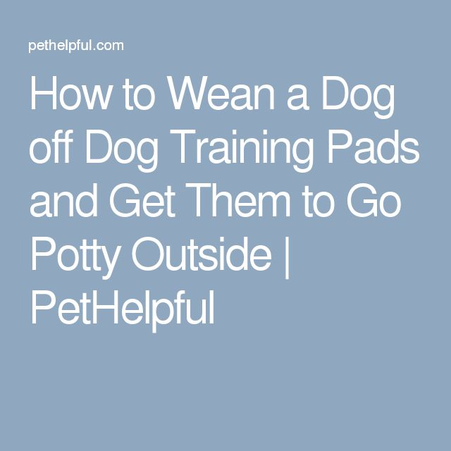 How to Wean a Dog off Dog Training Pads and Get Them to Go Potty Outside   PetHelpful