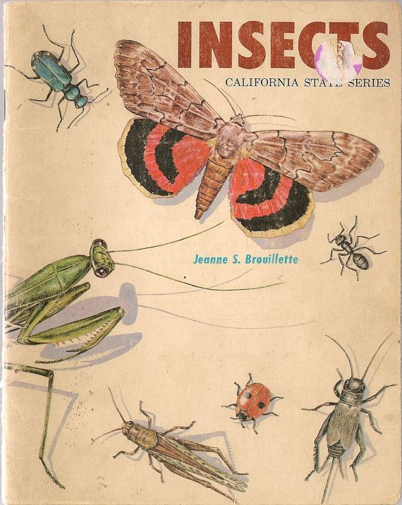 VINTAGE KIDS BOOK Insects California State Series