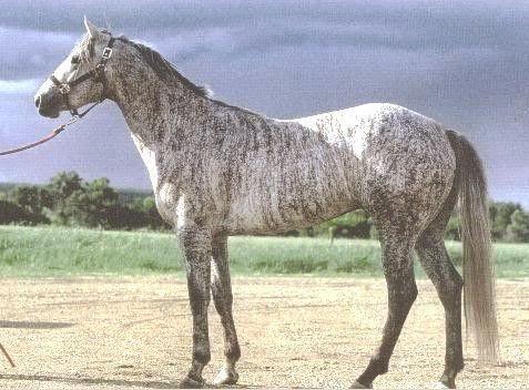 Grey Brindle. NEVER seen a brindle horse before.