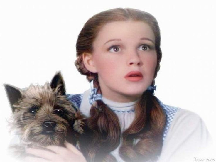 48 best The Wizard of Oz images on Pinterest | Wizards, Dr oz and ...