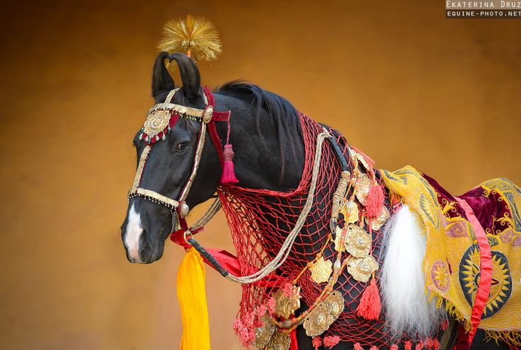 Marwari. During the late 16th century, the Rajputs of Marwar, under the leadership of Moghul emperor Akbar, formed a cavalry force over 50,000 strong. The Rathores believed that the Marwari horse could only leave a battlefield under one of three conditions – victory, death, or carrying a wounded master to safety. Over 300 years later, during the First World War, Marwar lancers under Sir Pratap Singh assisted the British.