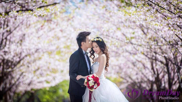 Cherry Blossom in Toronto