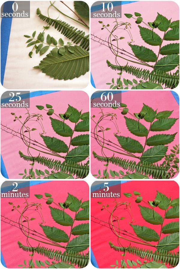 705 best images about teen diy crafts on pinterest for The art and craft of natural dyeing