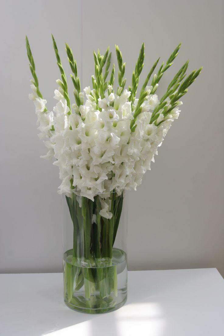 1000 bilder zu gladiole auf pinterest paradiesvogel. Black Bedroom Furniture Sets. Home Design Ideas