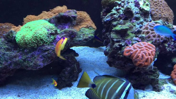 18 best images about red sea aquariums videos on pinterest for Aquarium recifal complet