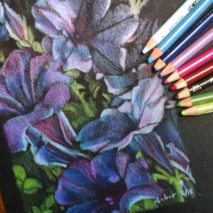 Coloredpencil Art Petunias Purple Blue Flowers Drawing