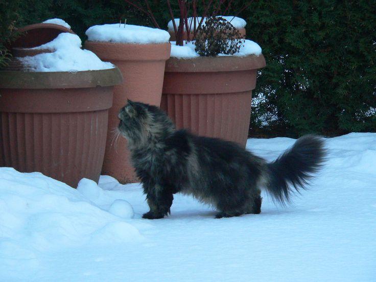 Cat in winter garden