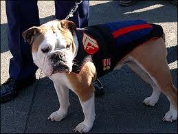 Marine Corps mascot
