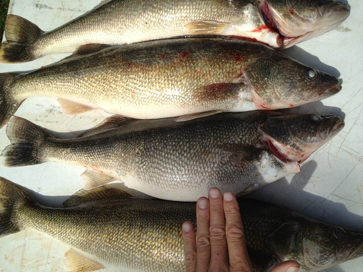 25 best fishing vs catching for Lake erie perch fishing report central basin