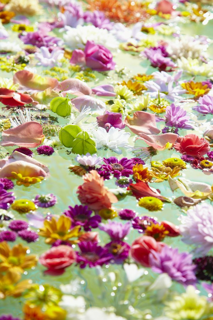 """Eintauchen in ein Meer aus Chrysanthemen-Blüten  Die Verwendung dieses Bildes ist für redaktionelle Zwecke honorarfrei. Veröffentlichung bitte unter Quellenangabe: """"Fachverband Deutscher Floristen e.V./ Blumenbüro"""