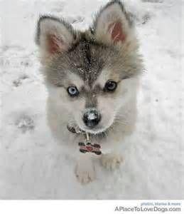 cute - cute puppys Picture