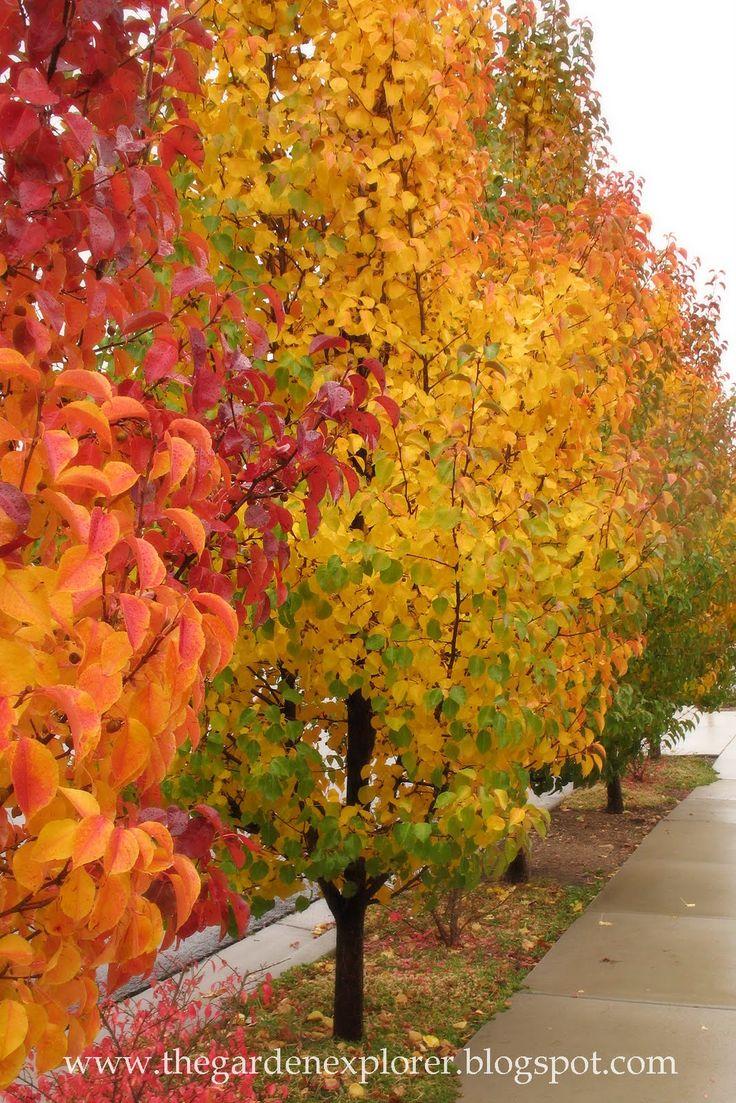 The Garden Explorer: Glorious Fall Foliage