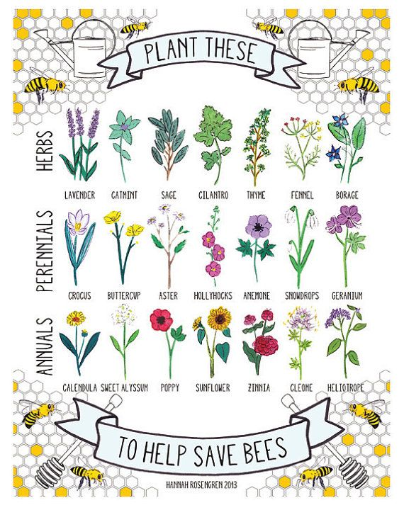 I will plant all these things this spring!!! 8x10 Plant These to Help Save Bees Print by HannahRosengren, $14.00