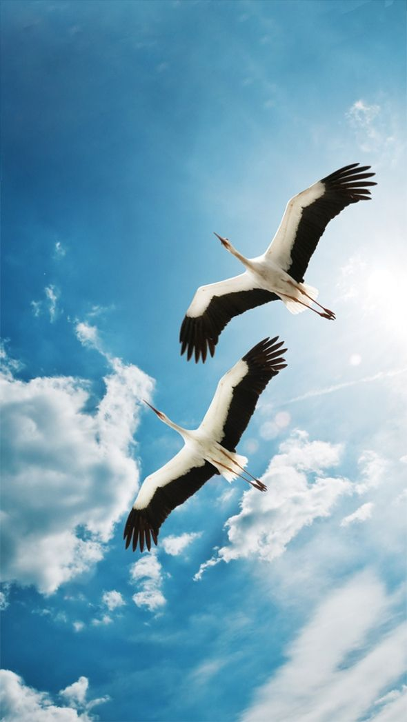 Storks in the sky.  (source: wallpaper4iphone.tumblr, photographer unknown)