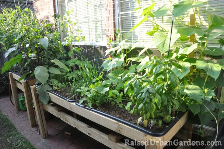 A raised garden for a friend: small spaces work! - Raised Urban Gardens - cement mixing trays