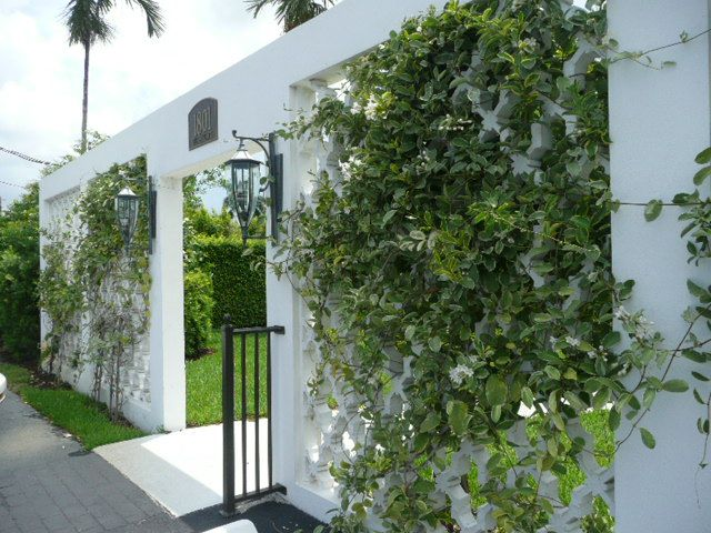 Image result for jasmine vine florida