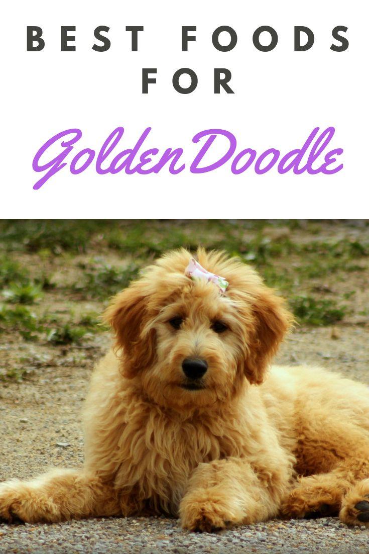 Best food for goldendoodles best puppy food