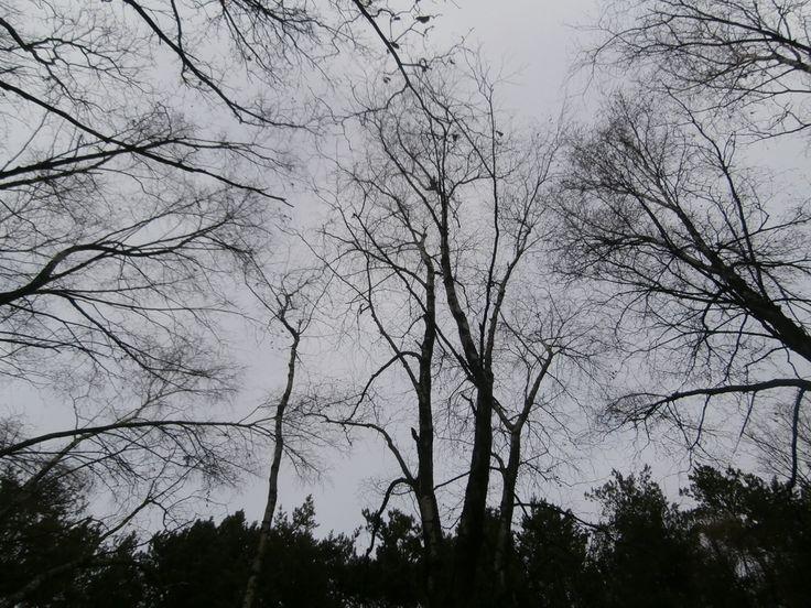 Пасмурный день в ноябре  Фотофильм