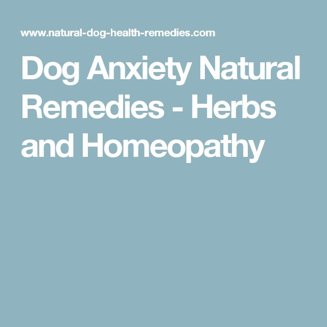 Natural Remedies Dog Separation Anxiety
