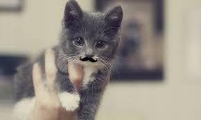 Cutest cat in mustache ever