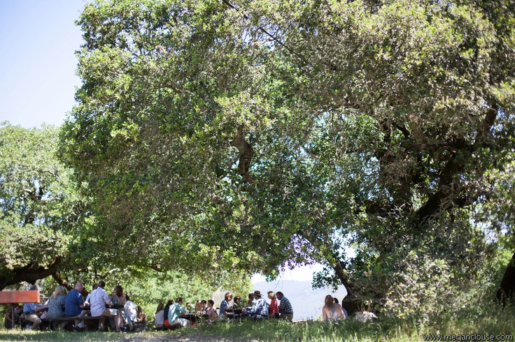Perfect place to celebrate, under the oaks at Jack London Park