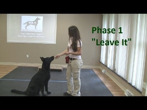 "How to Train a Dog to ""Leave It"" (K9-1.com) - YouTube"