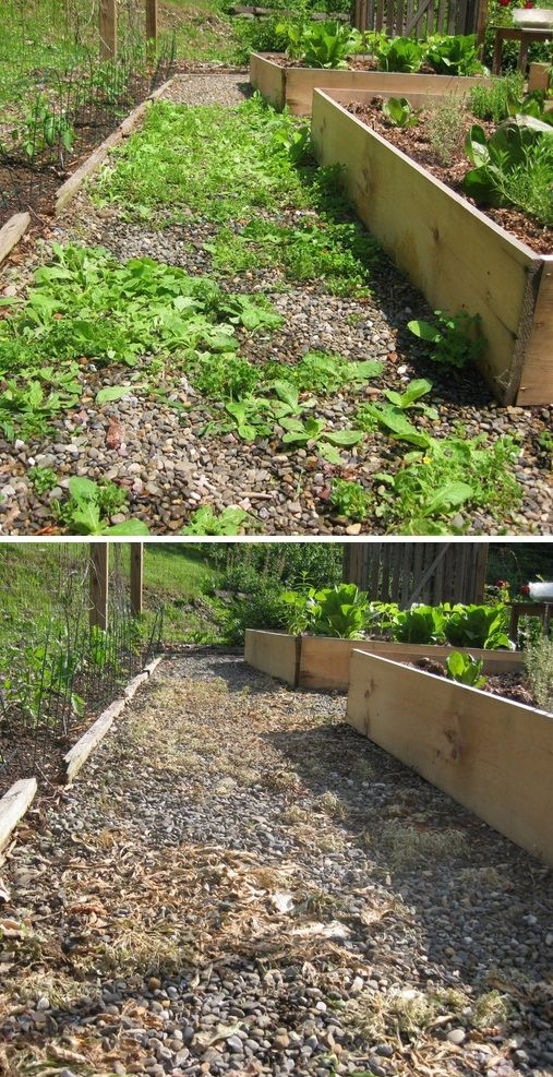 """Spray your weeds with diluted vinegar...not only will it kill them, but the plants and soil love it. Read how here, and see the before and after pictures. I just learned about this in my winter gardening class the other day and the teacher has done it for years."""