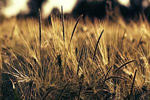 Kalorientabelle Getreideprodukte