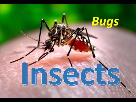 www.primarythemepark.com 2016 06 insect-videos-kids