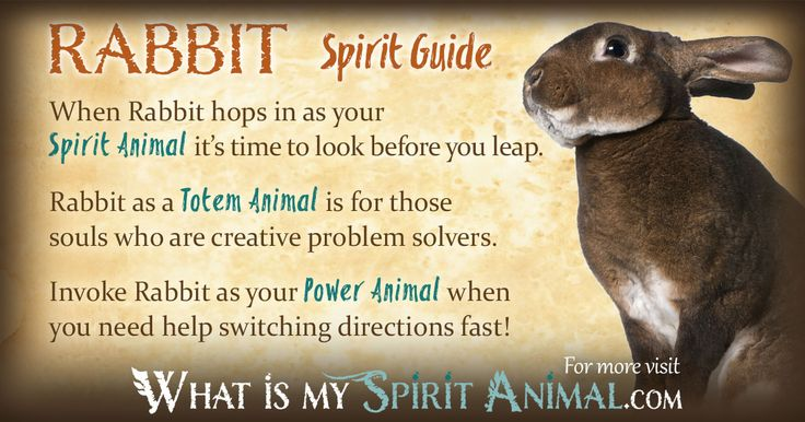 In-depth Rabbit Symbolism & Rabbit Meanings! Rabbit as a Spirit, Totem, & Power Animal. Plus, Rabbit in Celtic & Native American Symbols & Rabbit Dreams!