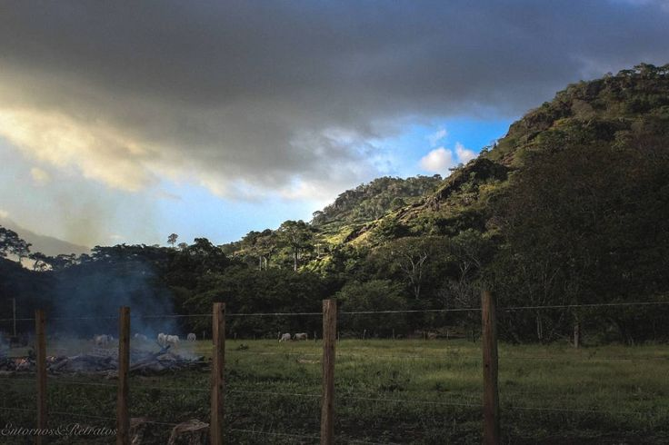 Interesting one by entornos_ #landscape #contratahotel (o) http://ift.tt/1Ud9Smp espacios y lugares donde retratar  #paisajes  #panamá #capira #yousocanon #canonpanama #montaña #mountains #smoke #fire #leña #cows #vacas