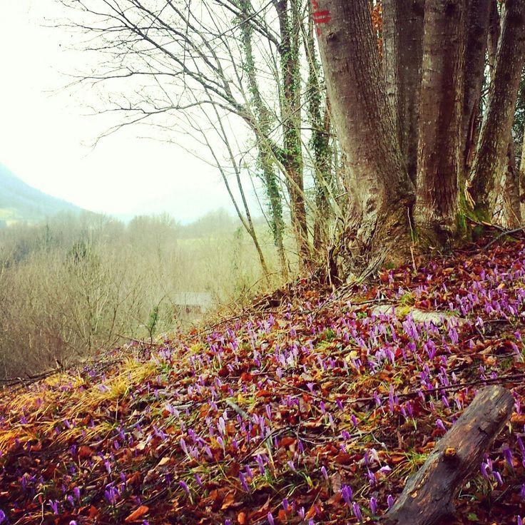 De #natuur ontwaakt. #bloemen #lente #vallei #bos #Slovenië / @MijnsLOVEnie / www.mijnslovenie.com