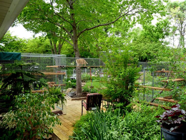 Awesome outdoor cat enclosure - Felix would love this, Aaron would divorce me