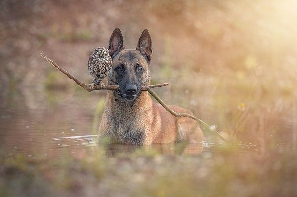 The wildlife photographer Tanja Brandt captured moments of intense affection between Ingo and Poldi respectively a sheepdog and an owl.