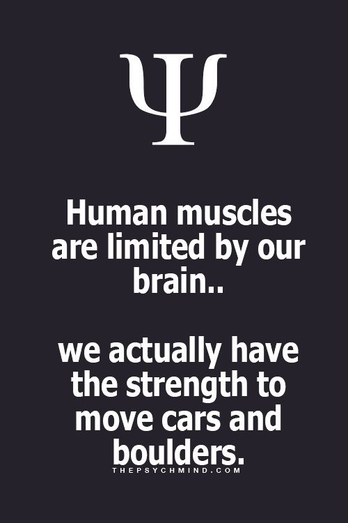 25+ best ideas about brain facts on pinterest | random interesting, Muscles