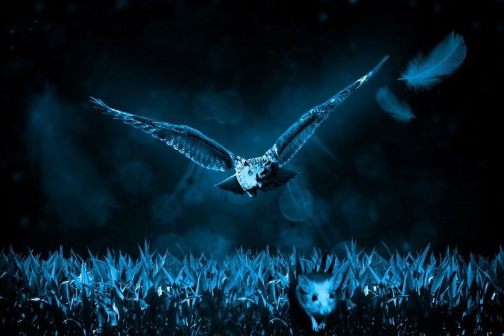Owl hunting for mouse in field at night