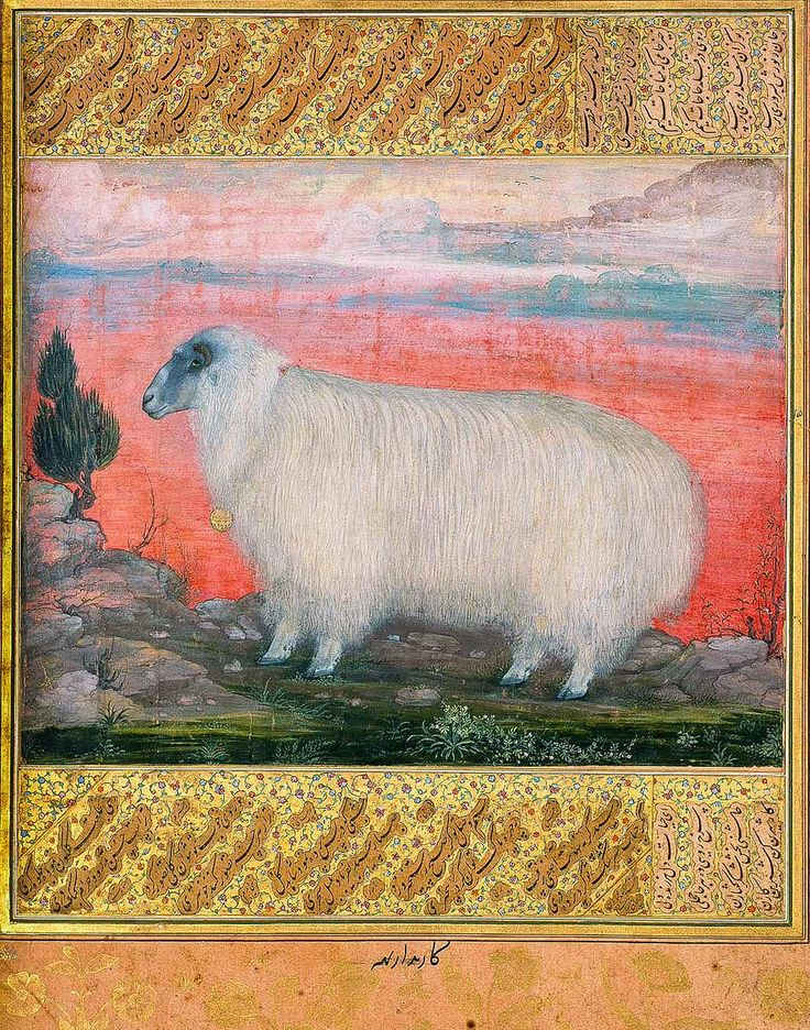 Mountain Sheep. Jahangir Album. By Padarath. 1615. Chester Beatty Library. Found on William Dalrymple's Twitter page.