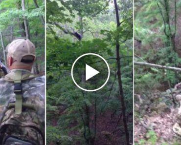Leopardo Aprende Dura Lição Depois De Tentar Atacar 2 Porcos-espinhos