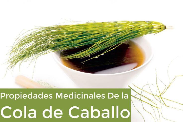 Las propiedades medicinales de la cola de caballo son desconocidas para muchas personas, por eso queremos que sepas cuáles son las bondades de esta planta..