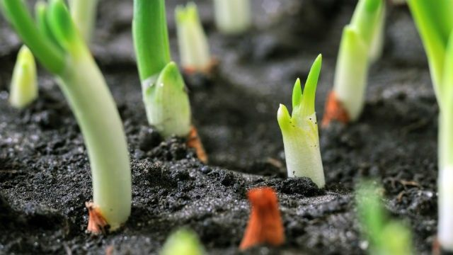 17 migliori idee su consigli per orto su pinterest for Cosa piantare nell orto adesso
