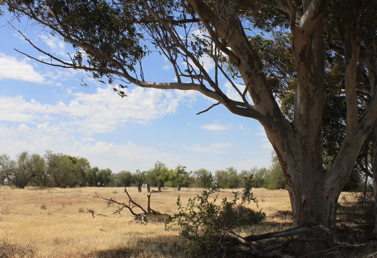 The last remains of Coffey's Hotel at Kewell. It was situated at the southern end of the surveyed township on the junction of the Longerenong-Warracknabeal Rd and Horsham-Minyip Rd.
