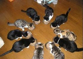 funny cats eating