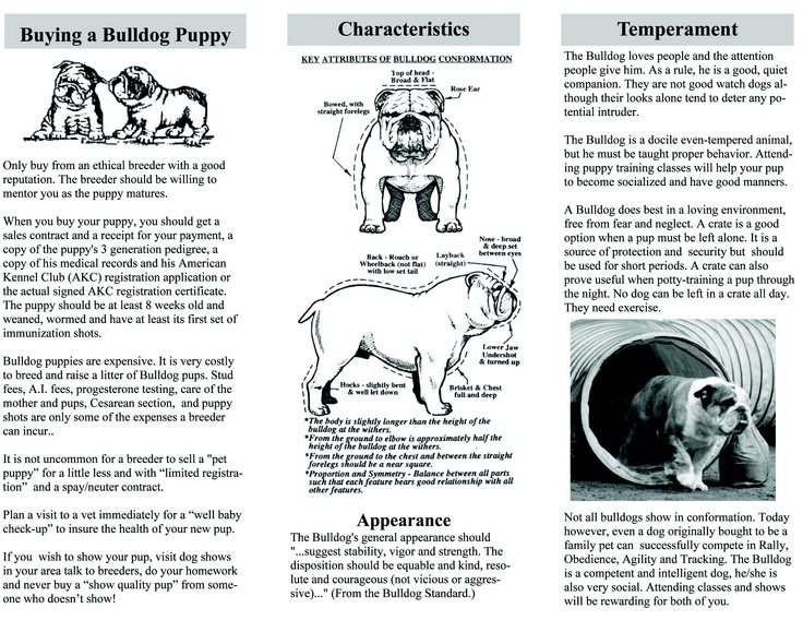 Best Bulldogs Images On   Bulldog Breeds