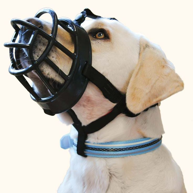 Baskerville Ultra Muzzle ($12.75 - $26.75) — Very humane basket muzzle because dogs can pant, drink, and be fed treats while wearing it. It is flexible and comfortable.