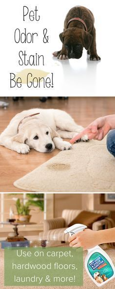 All-Natural Pet Odor Eliminator and Stain Remover Spray | Helps extend the life of your home with a professional-grade enzymatic solution formulated to eat away at odor-causing bacteria caused by urine smell, vomit, and other organic odors and stains. It works amazing well on carpet, furniture, couches, hardwood floors, dog beds, litter boxes, cat trees, crates, and even laundry. Explore our dog and cat products at http://myomegapet.com/products/pet-stain-and-odor-remover | Animals