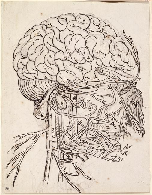 Charles Le Brun (1619-1690) | Cerveau, cervelet et nerfs crâniens de l'homme vus de côté